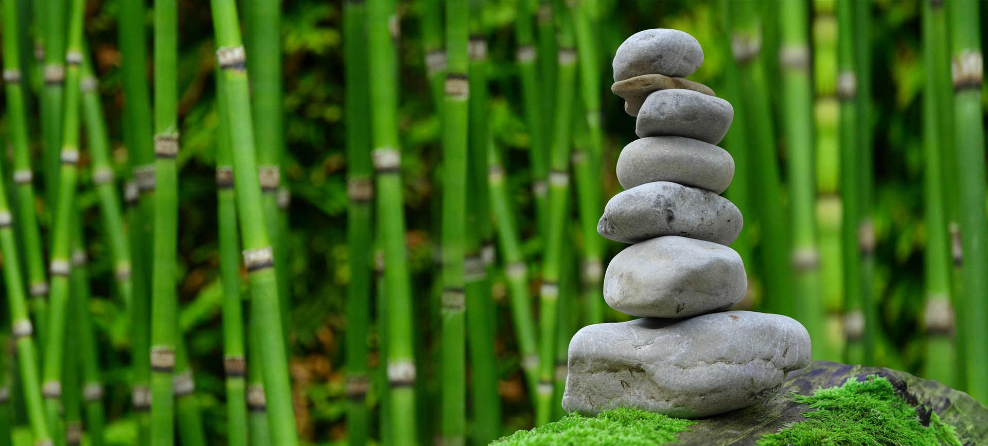 zen stone meditation bamboo forest wellness being well thrive personally