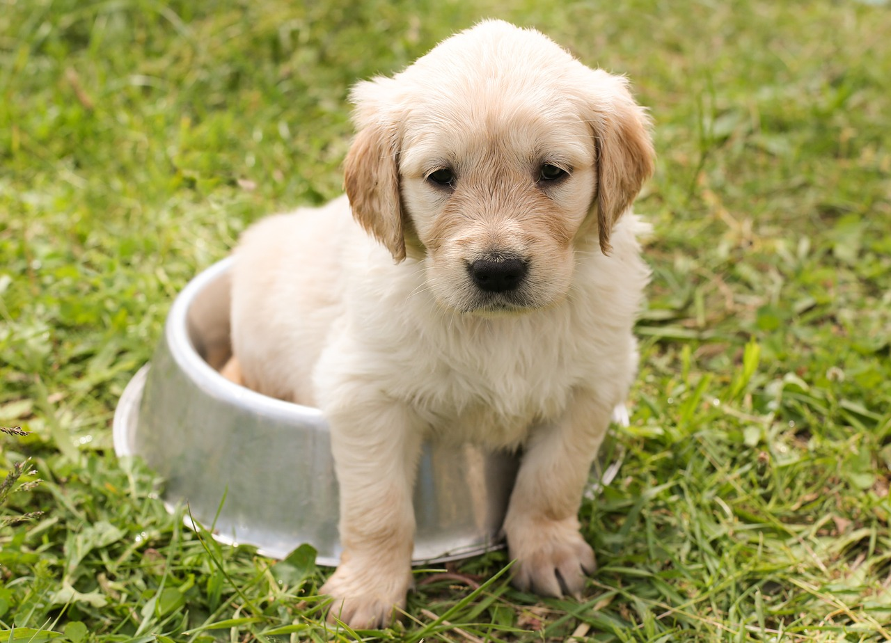 small white puppy 4 ways pets impact mental health